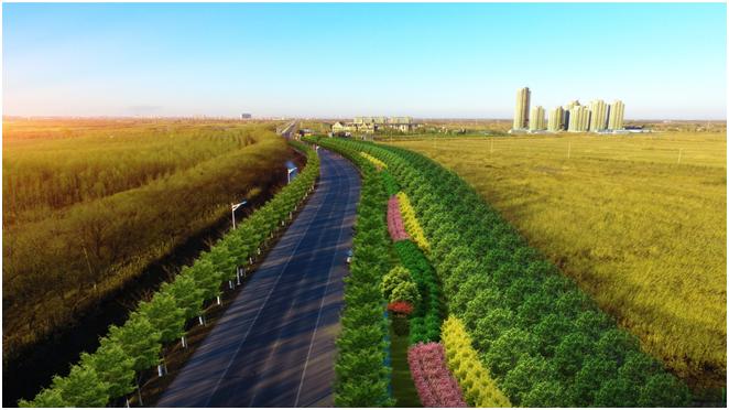 宝白公路绿化提升改造工程